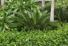 Belgrave South Tropical landscaping 4